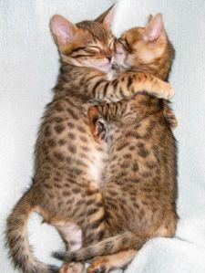 Kitty-Hugs-being-nice-133512_640_853
